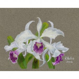 Orchid 5″x 7″