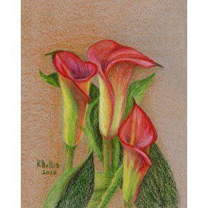 Calla Lilies 5″x 7″