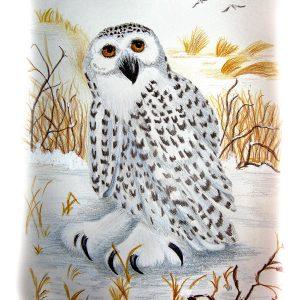Snow Owl 9″x 12″