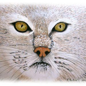 Snow Cat 9″x 12″