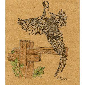 Pheasant in Flight 5″x 7″