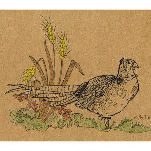 Pheasant on Ground 5″x 7