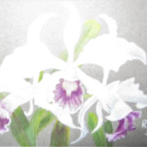Lady Godiva orchid 5×7