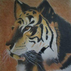 Tiger 9×9